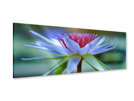Acrylglasbild Panorama Pretty Lotus