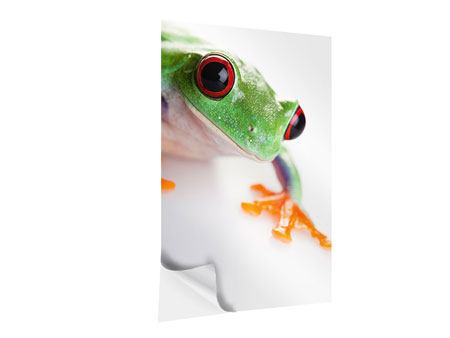 Klebeposter Frosch Close up