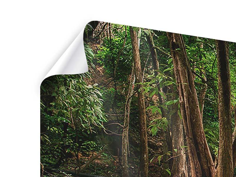 Poster Panorama Deep Forest